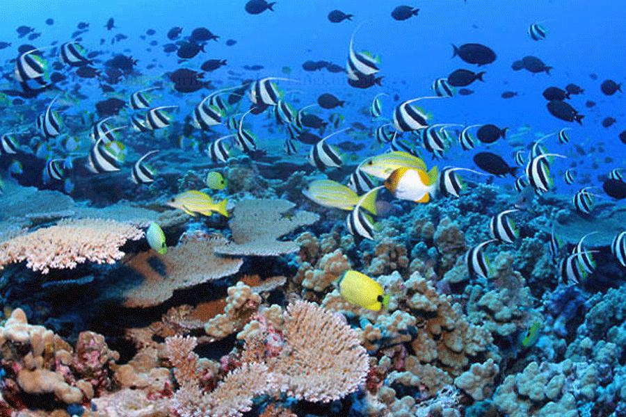 Pemanasan Global Ancam 900 Spesies Terumbu Karang