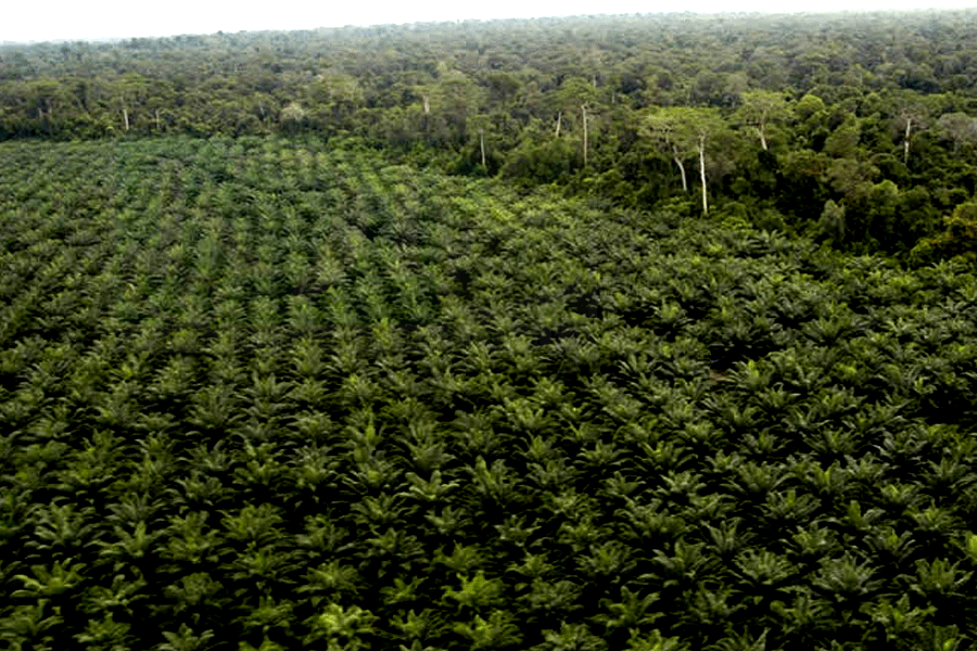 Penegakan Hukum Lingkungan Global DimulaiPenegakan Hukum Lingkungan Global Dimulai
