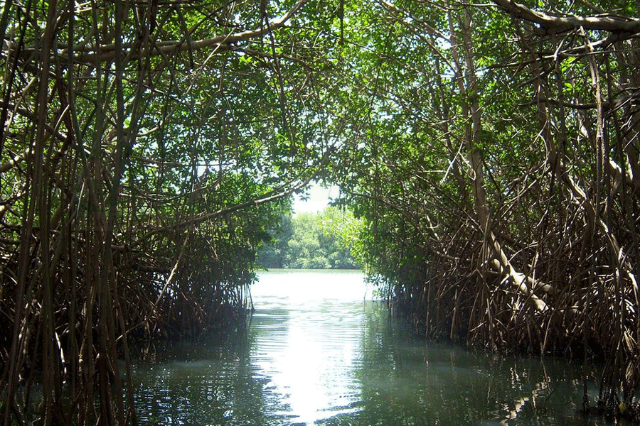 Mangrove Surabaya Harus Diselamatkan