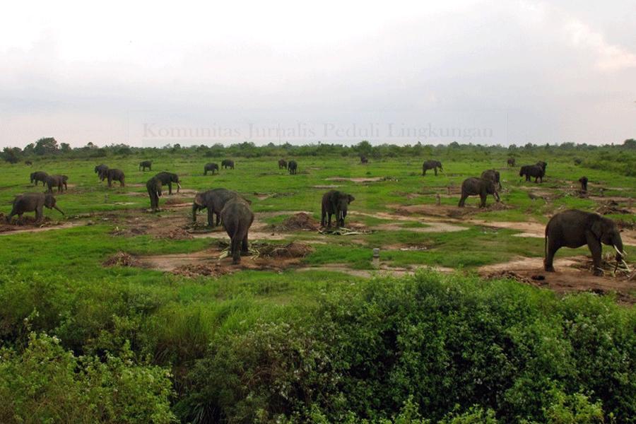Rumah Sakit Gajah Dibangun di Way Kambas