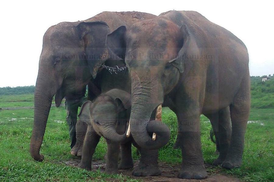 Gajah Kembali Rusak Rumah Warga
