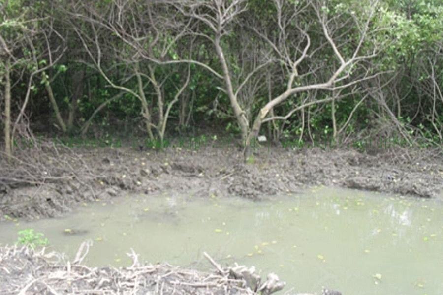Mangrove Pantai Timur Surabaya (Pamurbaya) Sangat Kritis