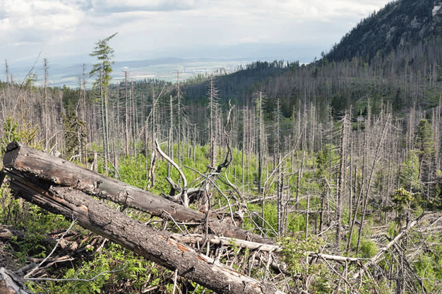 Greenpeace Desak SBY Hentikan Kebakaran Hutan