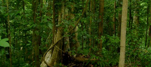 hutan-1