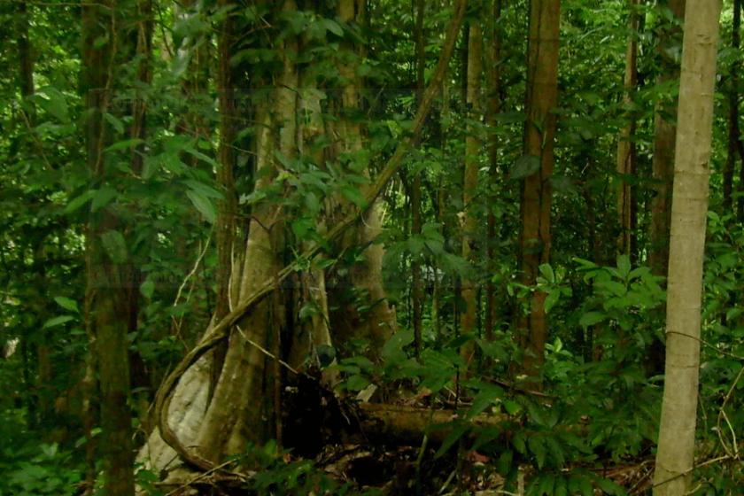 Masyarakat Adat Berperan Kelolah Hutan