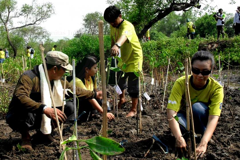 Warga Tanam Mangrove di HUT Surabaya