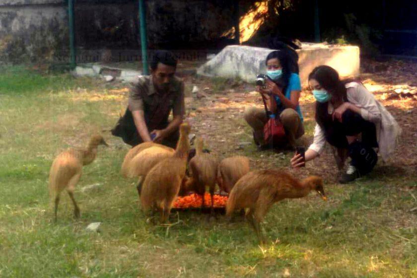 8 Kasuari Direlease Ke Papua